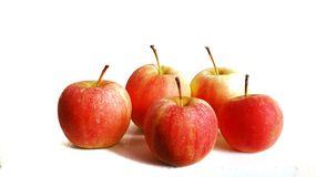 manzana variedad tiddy pomme